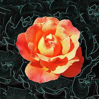Bright orange rose by Marinela Feier
