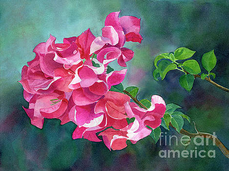 Bright Pink Bougainvillea with Dark Background by Sharon Freeman