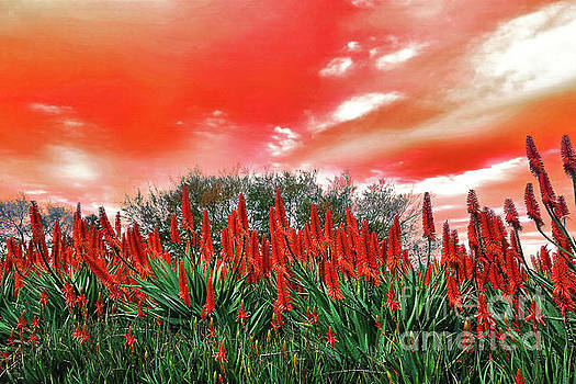 Bright Red Aloe Flowers by Kaye Menner by Kaye Menner