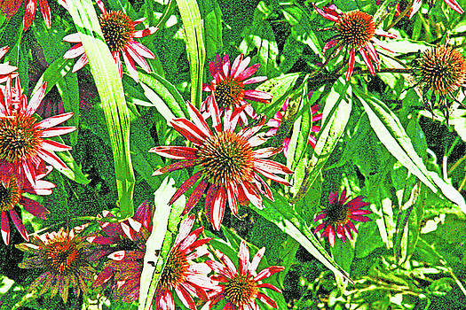 Bright red and White con flowers on Bright Green Background 2 8302017 by David Frederick