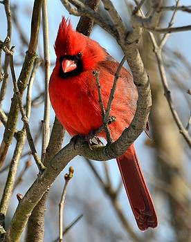 Bright Red by Fred Zilch