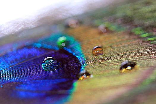 Angela Murdock - Bright Water Drops