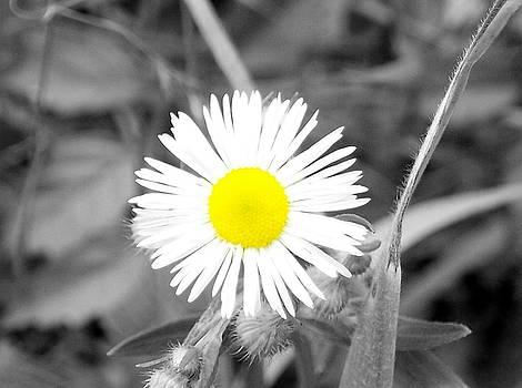 Bright White by Michael Lambert