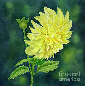 Bright Yellow Dahlia Flower with Dark Background by Sharon Freeman