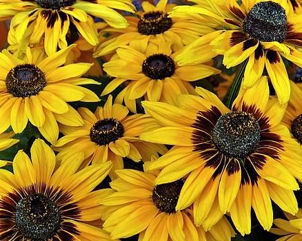 Patricia Strand - Bright Yellow Denver Daisies
