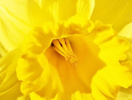 Bright Yellow by Werner Lehmann