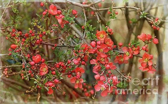 Brighten my garden by Yumi Johnson