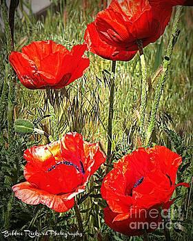 Brillaint Poppies by Bobbee Rickard