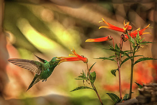Brilliant Hummer by Diana Marcoux