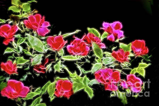 Brilliant Red Roses on Black by Linda Phelps
