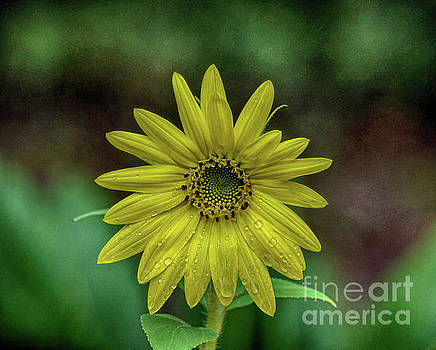 Brilliant Yellow Flower by Judy Hall-Folde