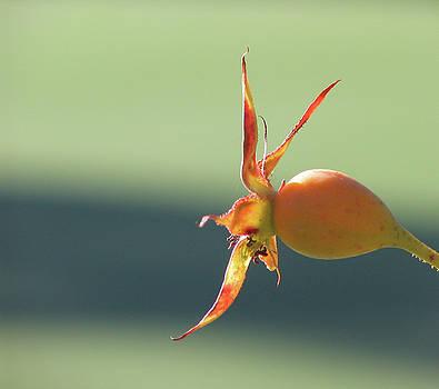 Brilliant Seed Pod by David Bader