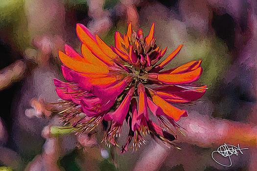 Brisbane Blossum by Chris Hood