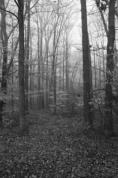 Regina  Williams  - Brisk Foggy Morning