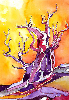 Bristlecone Pine 2 by Collin Murphy