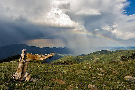 Bristlecone Pine Pointing to the Pot of Gold at the End of the Rainbow by Stephen Johnson