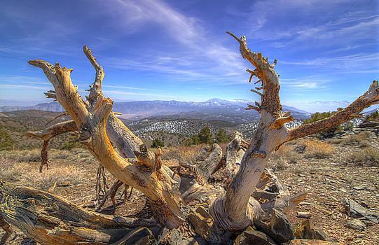 Scott Harris - Bristlecone Pine