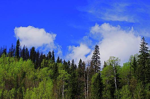 British Columbia Landscape by Robert Braley