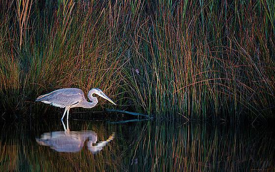 Broad Creek Blue by Jim Austin Jimages