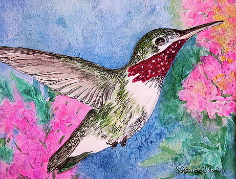 Patricia Beebe - Broad-tailed Hummer