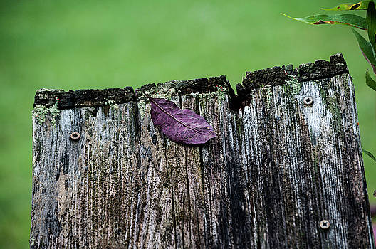 BROCK's LEAF by Christina VanGinkel