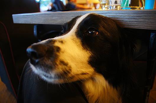 Brodie at Ravelston by Nik Watt