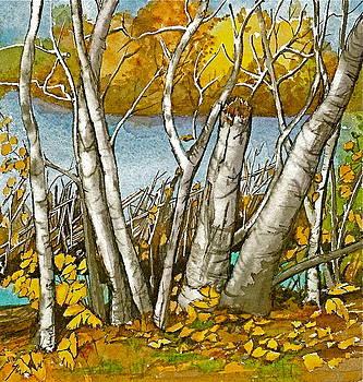 Broken Birch  by Lynn Babineau