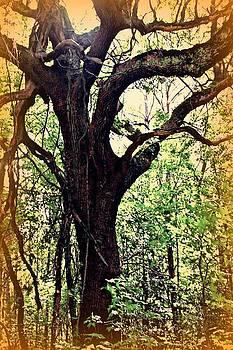 Broken Branch by Jill Tennison
