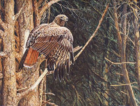 Broken Feather by Shari Erickson