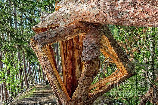 Broken in the Forest by CJ Benson