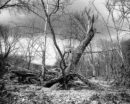 Broken Tree by Alan Raasch