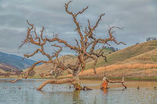 Broken Tree in Water by Marc Crumpler