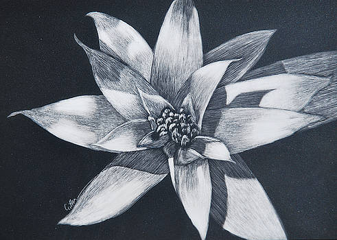 Bromeliad by Diane Cutter
