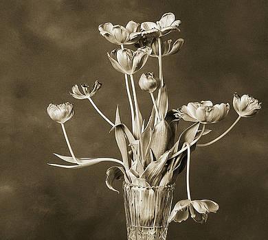 Bronzed by Klaus Bohn