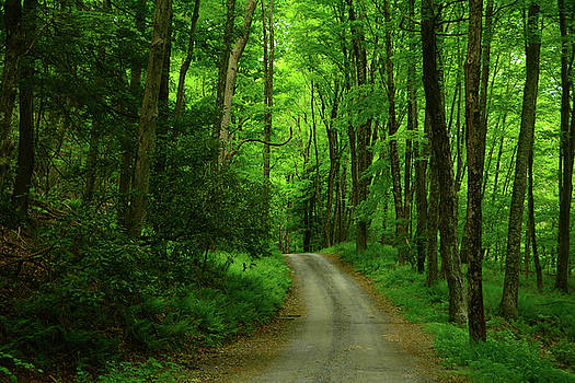 Brook Road  by Raymond Salani III