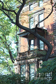 Silvia Bruno - brooklyn building and tree