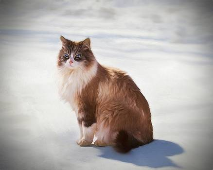 Brown and White Cat on Snow by Emily Smith