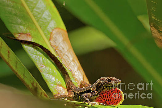 Brown Anole in the Swamp by Natural Focal Point Photography