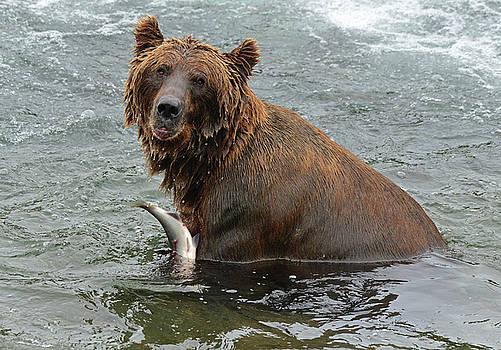Brown Bear at Brooks Falls by Jeffrey Hamilton