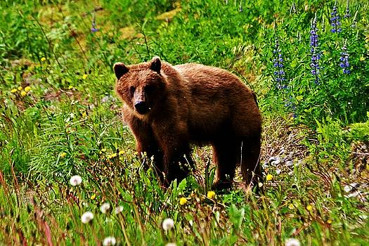 Brown Bear by Donna Cain