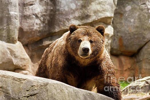 Brown Bear by Jill Lang