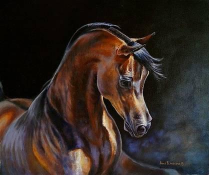 Brown beauty - arabian stallion by Anna Franceova