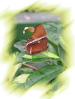Brown Beauty by Robert Ball