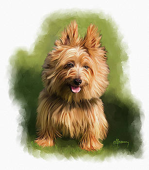 Brown Cairn Westie portrait by Michael Greenaway