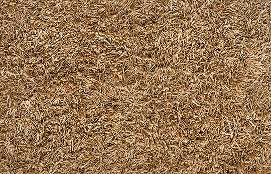 Eduardo Huelin - brown carpet texture