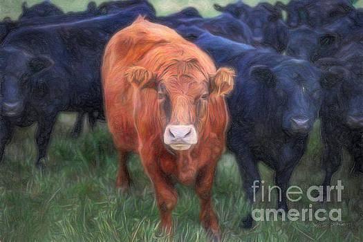 Brown Cow by Craig J Satterlee