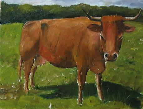 Brown Cow by Udi Peled