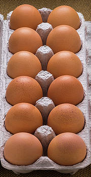 Brown Eggs In Carton by Steve Gadomski