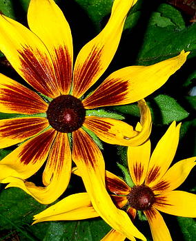 Brown Eyed Girls by Debbie May