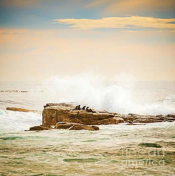 Tim Hester - Brown Fur Seals